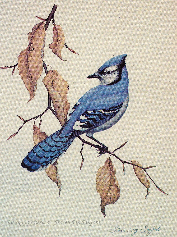 bird portraits steven jay sanford