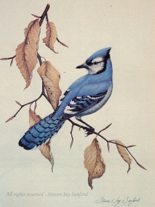 Blue Jay - Adk Life - rr - small