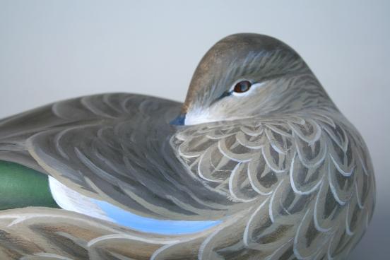 Bluewing Hen Sleeper - closeup