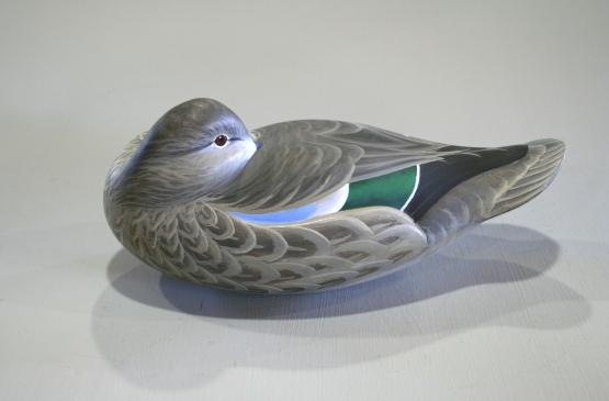 Bluewing Hen Sleeper - Sptember 2013 - Stbd