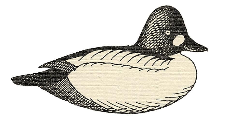 drake mallard duck decoy painting instructions