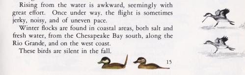 Ruddy - Ducks at a Distance excerpt
