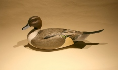Decoys & Carvings - Pintail