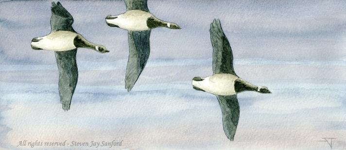 Three Brant - Blue