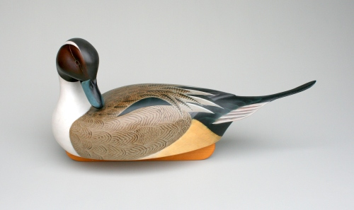 TMS Pintail - WS