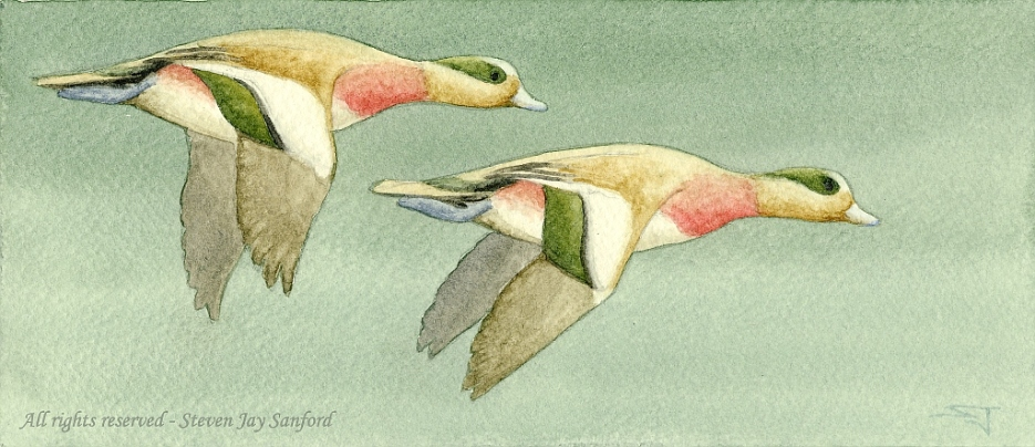 Two Wigeon