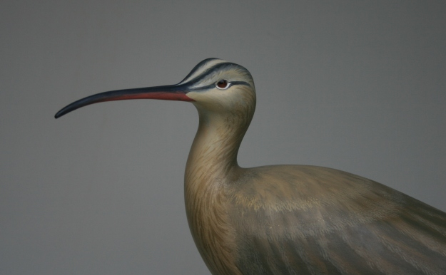 Whimbrel 3 - closeup