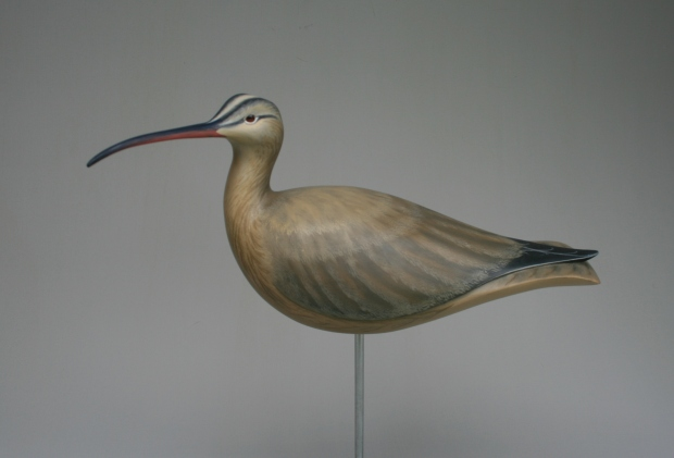 Whimbrel 6 - full