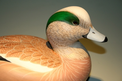 Woods Wigeon - close-up c