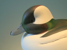 Decoys & Carvings - Bufflehead closeup