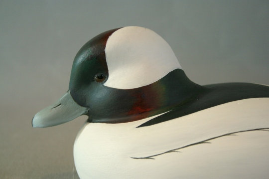 WS - Thompson Bufflehead closeup