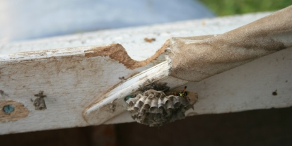 "3. Only Paper Wasps - but a ""dutchman"" will be needed for the port coaming."