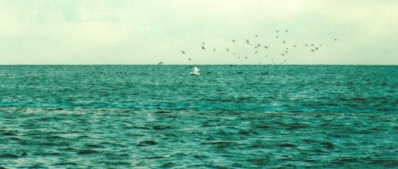 17 W19 Watts - Stooling flock