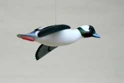 Bufflehead Flyer before it got to Lake Champlain.