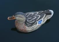 homer-hen-mallard-01