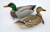 mallard-pair-in-snow-02