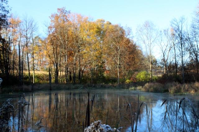 Opener 15 - Hickory Swamp